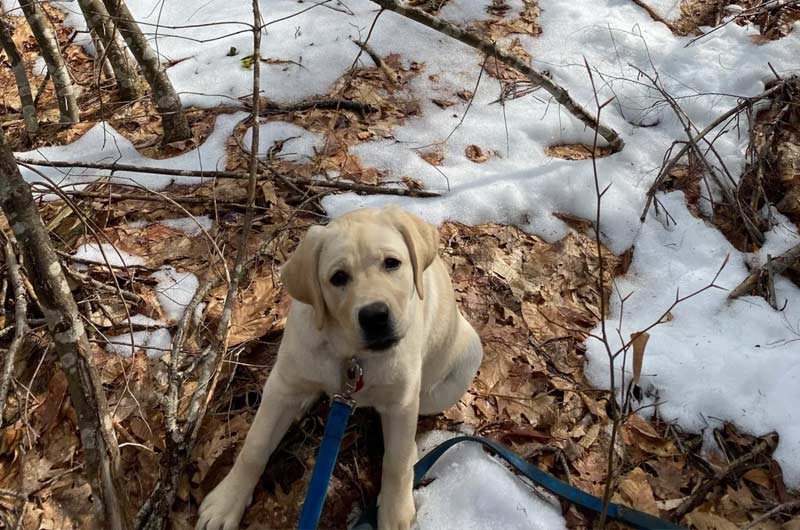 Puppy in the Woods