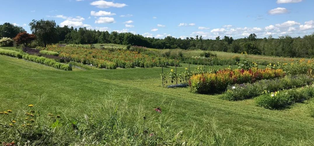 Cranberry Meadow Farm Gardens